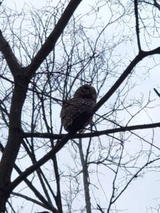 Solitary owl in a tree