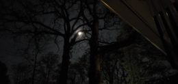 night view of two trees